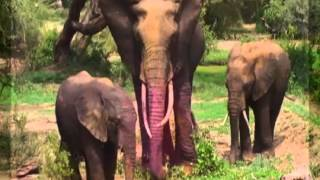 Kundalini Yoga Workout Music Instrumental - Video- Elephant Dance (African Drums)