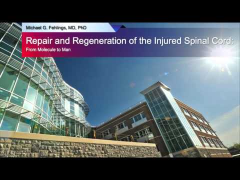 Repair and Regeneration of the Injured Spinal Cord: From Molecule to Man