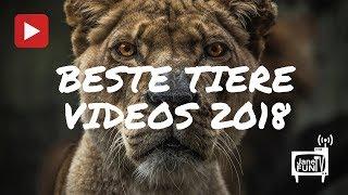 Beste Tier Videos 2018 | JaneFun TV