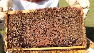 Keeping Honey Bees: An Introduction at the North American Bee Care Center