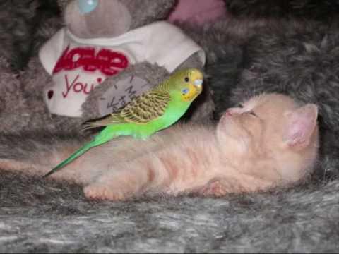 Film Katze und Vogel