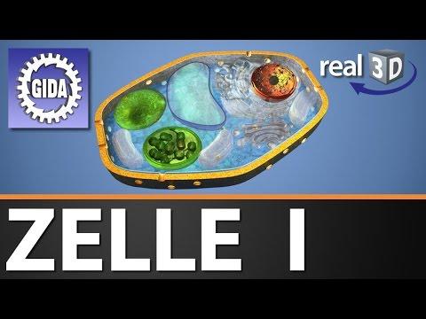 Gida Zelle I Biologie Real3d Software Dvd Trailer