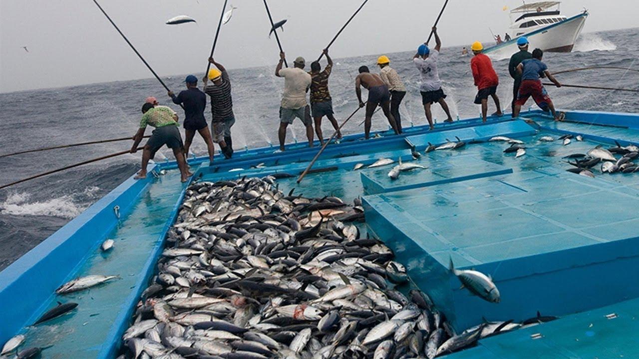 Catching Tuna Fish Maldivian style l Amazing Fishing Methods 🐟