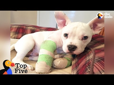 Puppy With Deformed Elbows Gets A Second Chance + Other Puppy Rescues | The Dodo Top 5