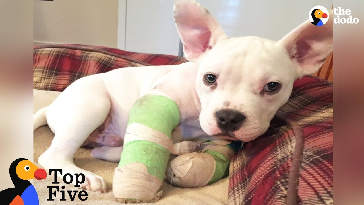 Puppy With Deformed Elbows Gets A Second Chance + Other Puppy Rescues Top 5