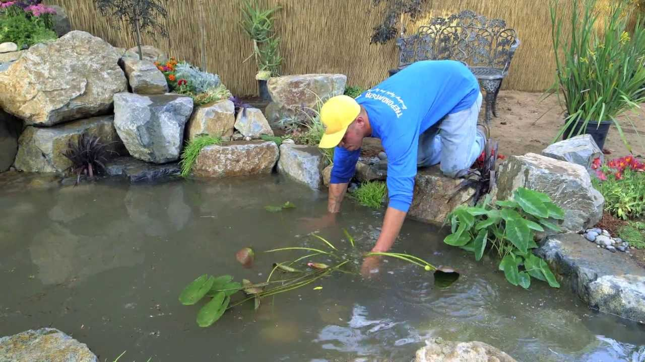 How To Build A Fish Pond Part 21 Pond Plants Waterfall Final Youtube