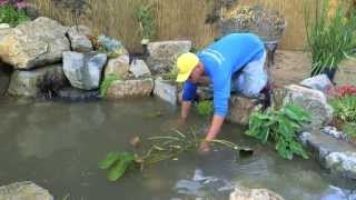 How To Build A Fish Pond - Part 21 | Pond Plants & Waterfall - Final