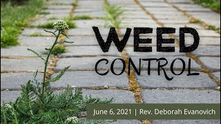 Weed Control   June 6, 2021   Canonsburg UP Church