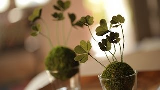 Robert's St Patrick's Day Diy Clovers