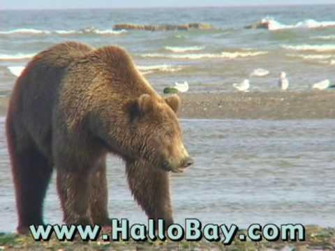 Hallo Bay Bear Camp Katmai National Park