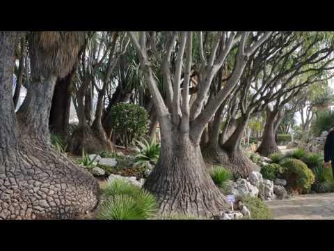 Monaco Egzotikus park