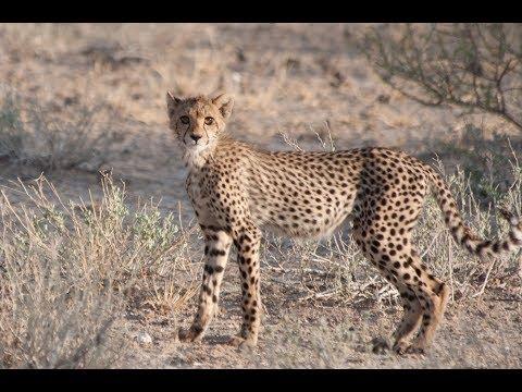 Selfdrive 4x4 Namibia & Botswana Part 11