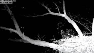 DHEC An Owl Knocks Parent Off Its Perch 2017 12 08