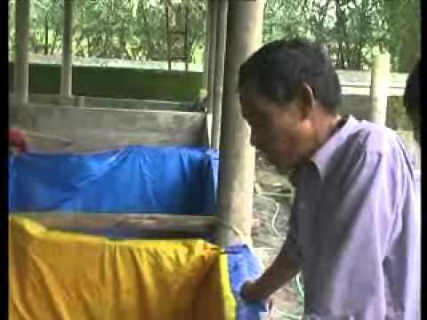 TRANG NÔNG NGHIỆP ngày 15 - 7 - 2014   Kỹ thuật nuôi lươn không bùn trong bể xi măng phát lại