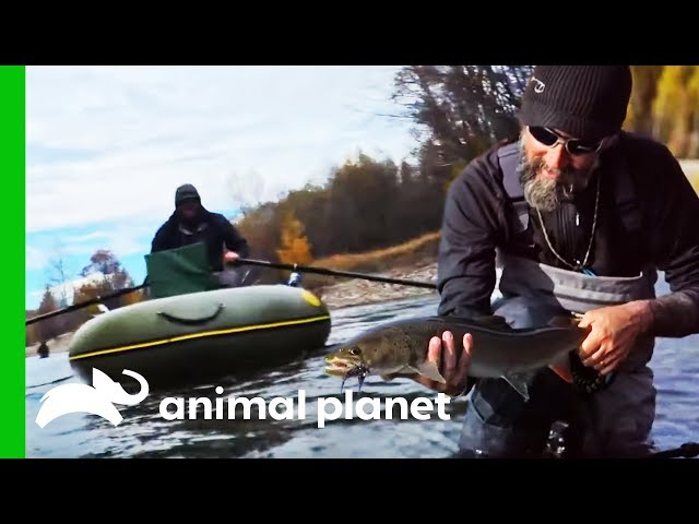Cameraman Needs Rescuing While Crew Fish For Giant Taimen | Fish Or Die