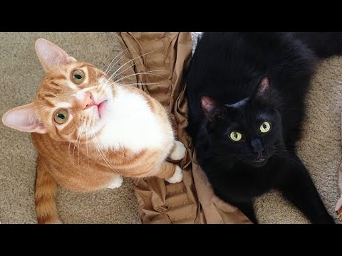 Cole & Marmalade's First LIVE Stream!