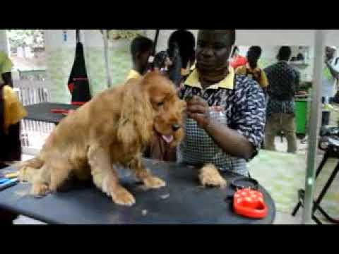 Ghana SPCA Field Trip to LEMLA Vet Clinic