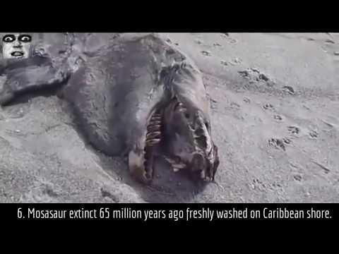 Unexplained Creatures 10 Unexplained Alive A...