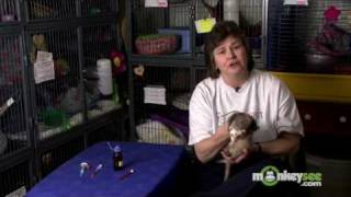 Ferret Care - Behavioral and Medical Issues