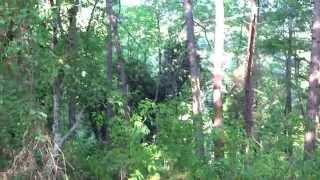 Звуки летнего леса. Мой любимый уголок в последние дни лета. Lazarevskoe - SOCHI - RUSSIA