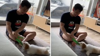 Puppy gets dragged across carpet while holding on to toy