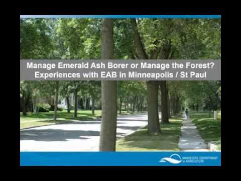 Manage emerald ash borer, or manage the forest?