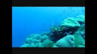 Timon オーストラリアの秘境~クリスマス島~ ダイビング 2015Nov