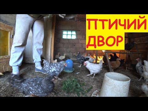 Наше птичье царство / Цыплята, гусята, утята и МУКРОП