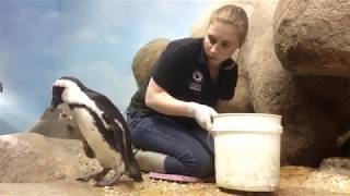 Animal Care and Well-Being at the Academy | California Academy of Sciences