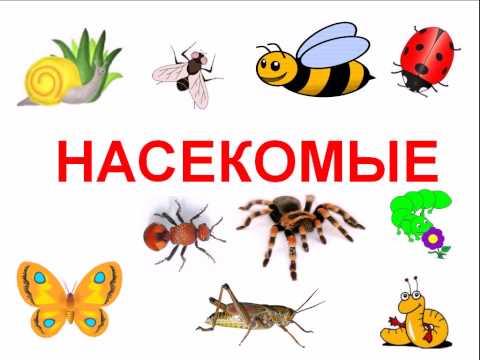 Насекомые и  жуки для детей