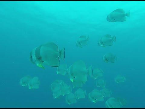 Seychelles - Swimming In An Aquarium