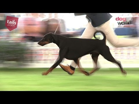 Windsor Dog Show 2016 - Best in Show