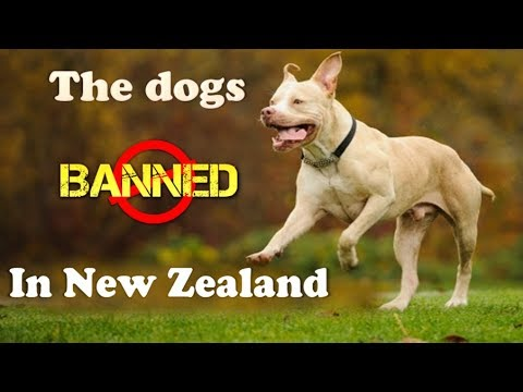 The Dogs banned in New Zealand