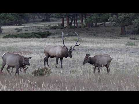 national-geographic---deer-mating-on-tropical-mountains---wild-nature-life