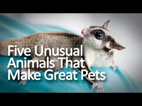 five-unusual-animals-that-make-great-pets