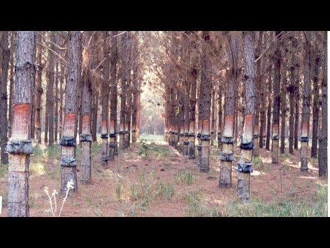 Tcc -Ceramica Marajoara - Beatriz Cominatto de YouTube · Duração:  32 minutos 51 segundos