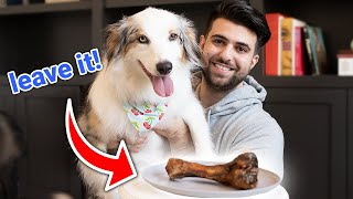 Leaving My Dogs Alone With Food (Leave It Challenge with SypherPK)