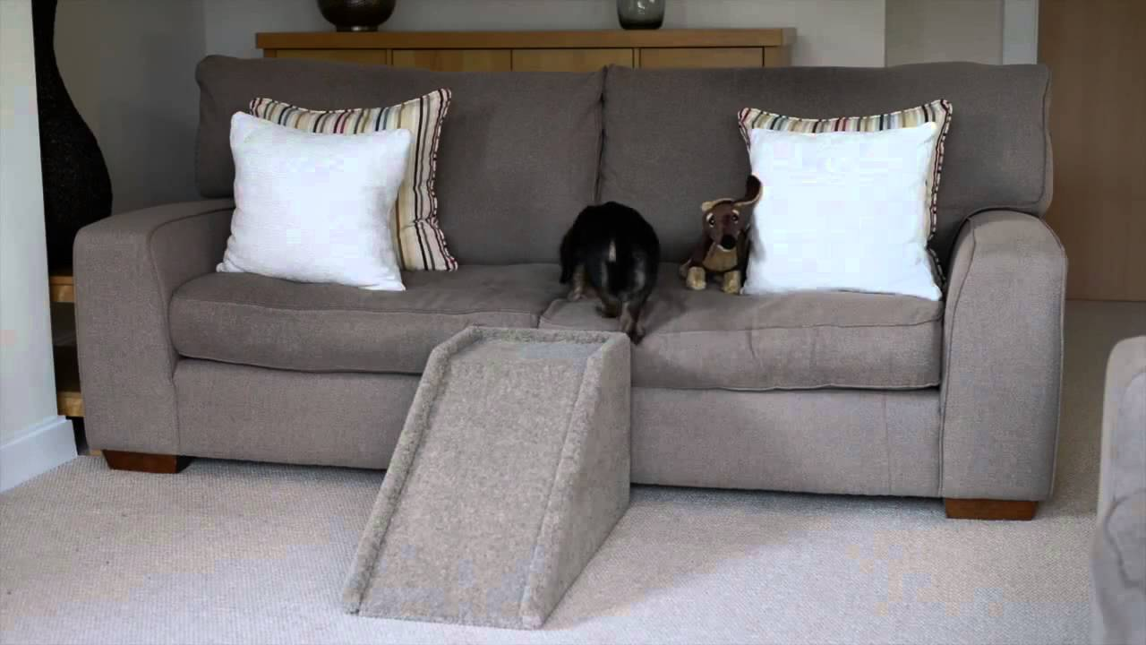 Pet Steps For Small Dogs