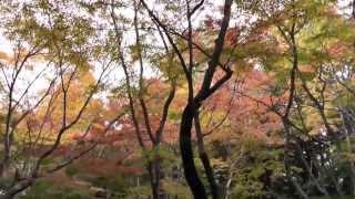 祇王寺 その5 庭園 京都の紅葉名所 Giou-ji Temple autumn leaves attractions in Kyoto part.5 高岡智照 検索動画 5