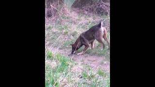 Собака кусает змею(, 2015-07-05T19:32:02.000Z)