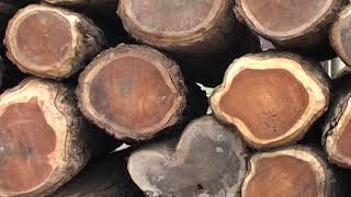 World famous wood market.....