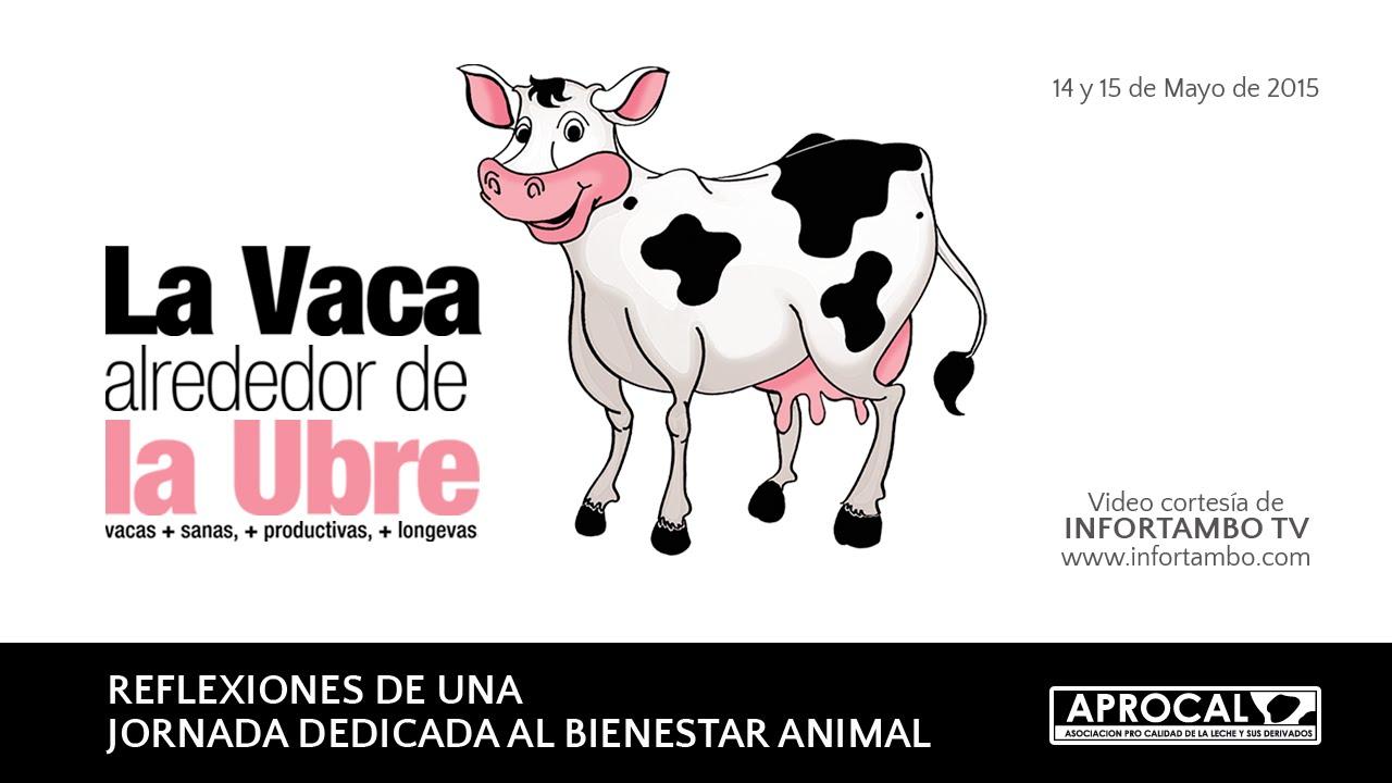 La ubre alrededor de la vaca: Reflexiones de la jornada - YouTube
