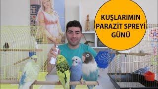 Kuşlarımın Parazit Spreyi Günü