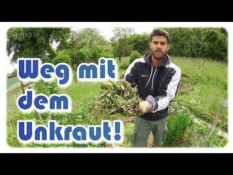 Unkraut im Garten | Unkraut entfernen, ernten & aufräumen