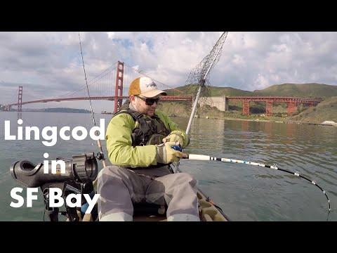 Lingcod/Rockfish In SF Bay (Kayak Fishing For Halibut)