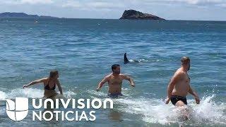 En video: Fueron a bañarse a la playa y salieron corriendo al encontrarse con orcas