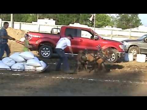 W. Otter Tail Fair Horse Pulls 2016