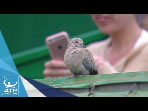 Bird Disrupts Nadal vs. Edmund Match At Critical Moment Monte-Carlo 2017