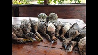 Охота на утку с чучелами, перелётной всё больше, свиязь, широконоска,  вкусные блюда...duck hunting