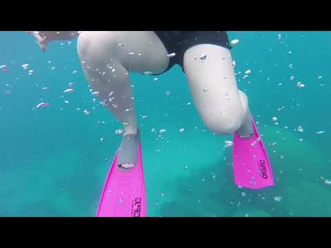 Snorkeling holiday on the great barrier reef and magnetic island